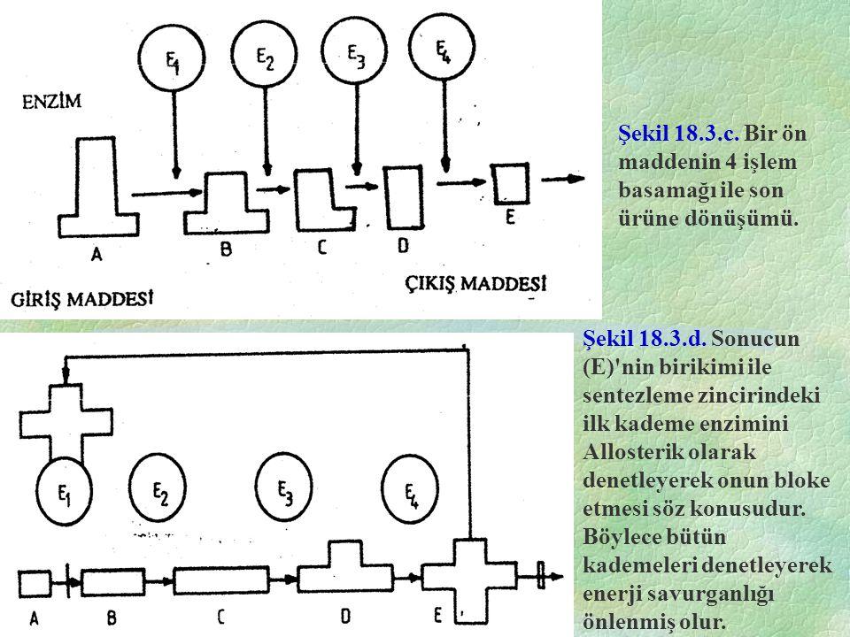 E.Coli'de Lac Sistemi E. Coli kromozomunun Lac segmentinin üç sıstronu içerdiği bilinmektedir.