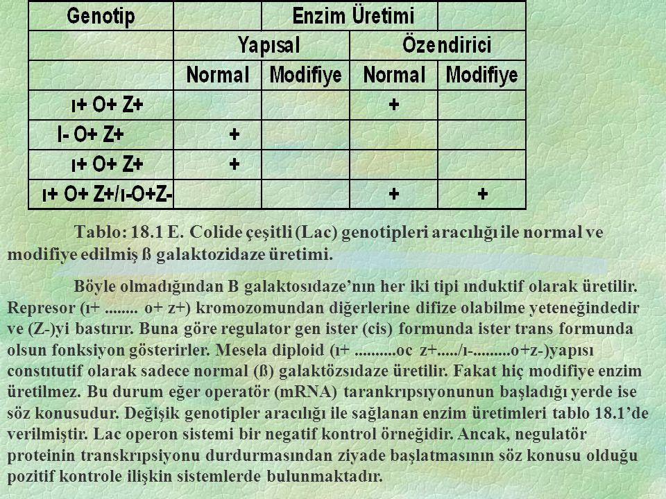 Tablo: 18.1 E. Colide çeşitli (Lac) genotipleri aracılığı ile normal ve modifiye edilmiş ß galaktozidaze üretimi. Böyle olmadığından B galaktosıdaze'n