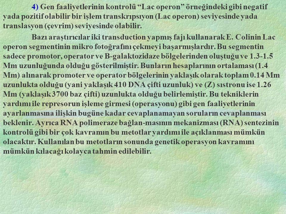 """4) Gen faaliyetlerinin kontrolü """"Lac operon"""" örneğindeki gibi negatif yada pozitif olabilir bir işlem transkrıpsıyon (Lac operon) seviyesinde yada tra"""