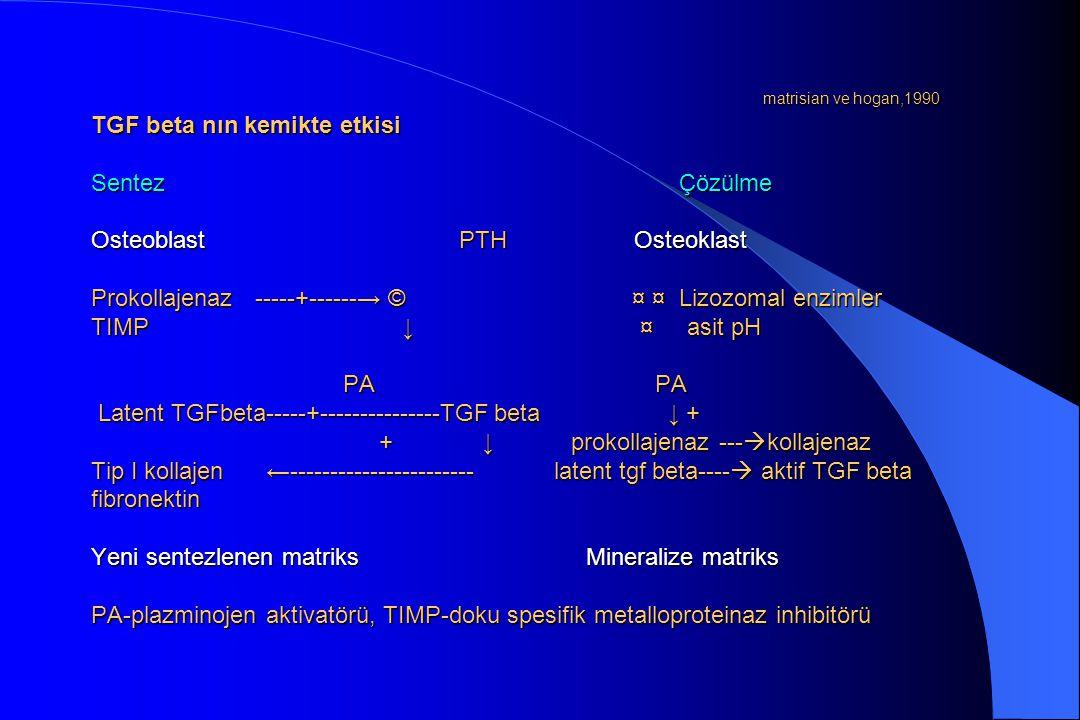 matrisian ve hogan,1990 TGF beta nın kemikte etkisi Sentez Çözülme Osteoblast PTH Osteoklast Prokollajenaz -----+------→ © ¤ ¤ Lizozomal enzimler TIMP