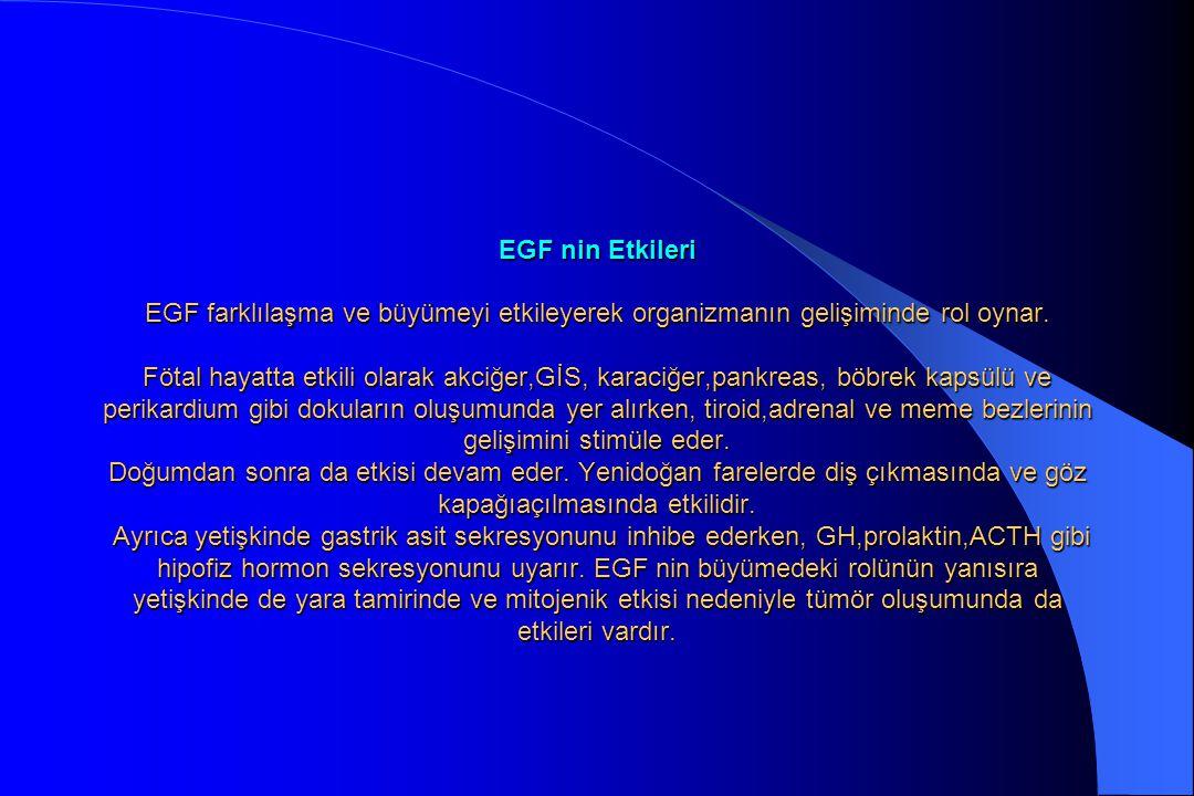 EGF nin Etkileri EGF farklılaşma ve büyümeyi etkileyerek organizmanın gelişiminde rol oynar. Fötal hayatta etkili olarak akciğer,GİS, karaciğer,pankre