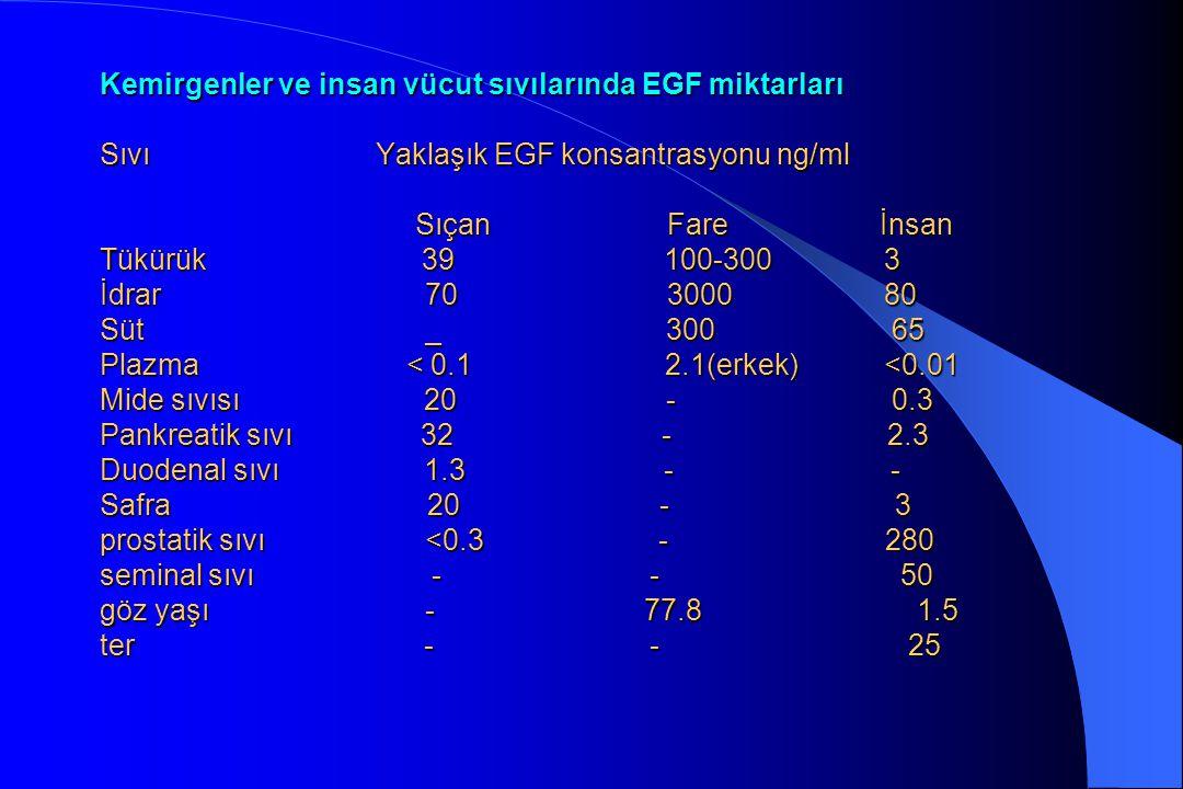 Kemirgenler ve insan vücut sıvılarında EGF miktarları Sıvı Yaklaşık EGF konsantrasyonu ng/ml Sıçan Fare İnsan Tükürük 39 100-300 3 İdrar 70 3000 80 Sü