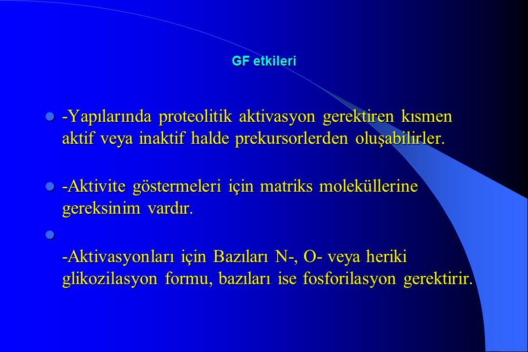 GF etkileri -Yapılarında proteolitik aktivasyon gerektiren kısmen aktif veya inaktif halde prekursorlerden oluşabilirler. -Yapılarında proteolitik akt
