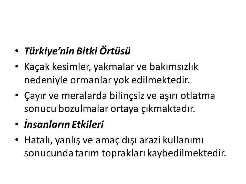 Türkiye'nin Bitki Örtüsü Kaçak kesimler, yakmalar ve bakımsızlık nedeniyle ormanlar yok edilmektedir. Çayır ve meralarda bilinçsiz ve aşırı otlatma so