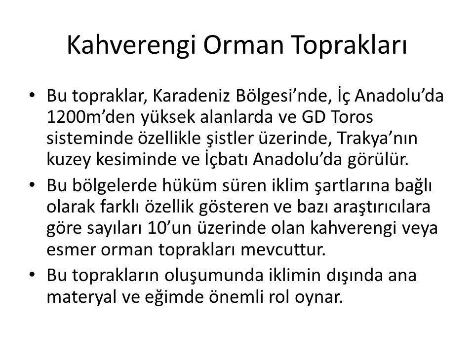 Kahverengi Orman Toprakları Bu topraklar, Karadeniz Bölgesi'nde, İç Anadolu'da 1200m'den yüksek alanlarda ve GD Toros sisteminde özellikle şistler üze