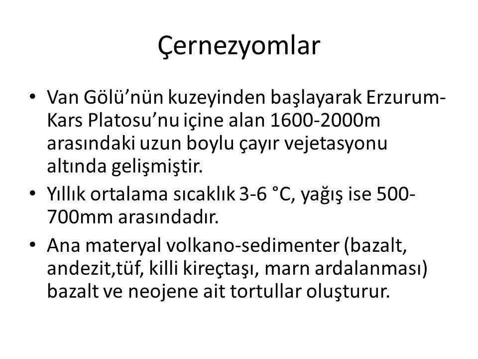 Çernezyomlar Van Gölü'nün kuzeyinden başlayarak Erzurum- Kars Platosu'nu içine alan 1600-2000m arasındaki uzun boylu çayır vejetasyonu altında gelişmi