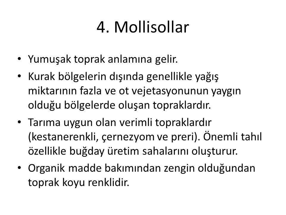 4. Mollisollar Yumuşak toprak anlamına gelir. Kurak bölgelerin dışında genellikle yağış miktarının fazla ve ot vejetasyonunun yaygın olduğu bölgelerde