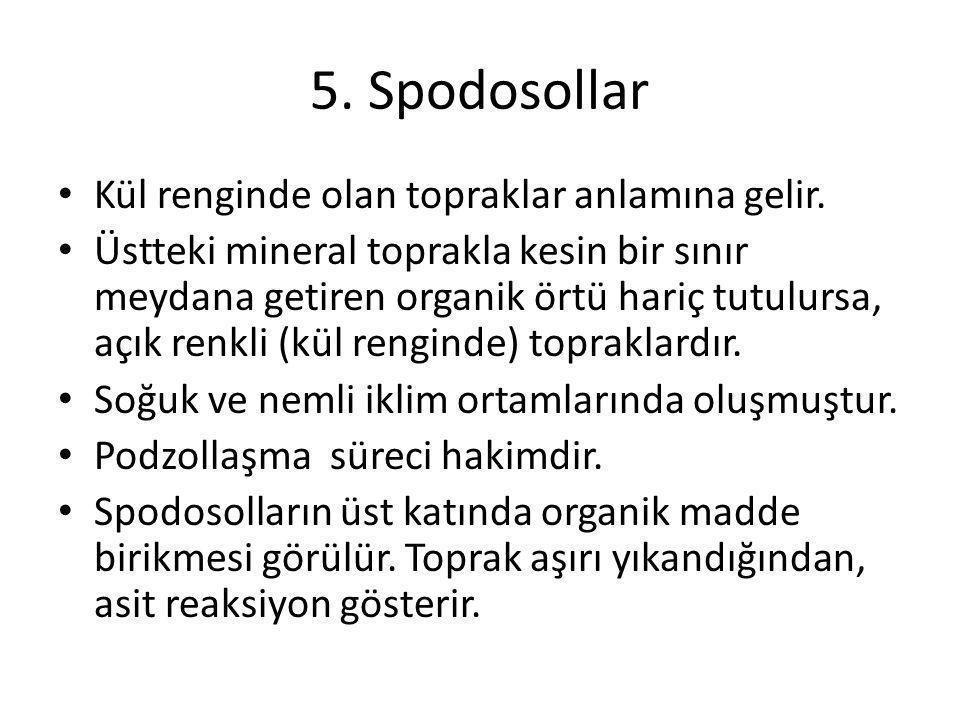 5. Spodosollar Kül renginde olan topraklar anlamına gelir. Üstteki mineral toprakla kesin bir sınır meydana getiren organik örtü hariç tutulursa, açık