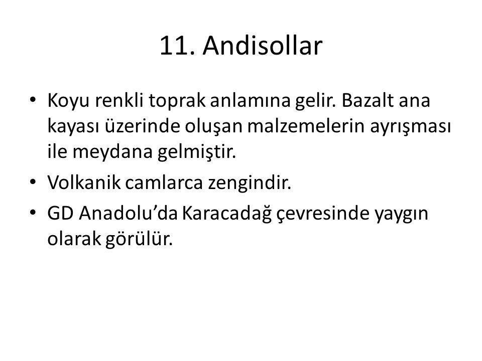 11. Andisollar Koyu renkli toprak anlamına gelir. Bazalt ana kayası üzerinde oluşan malzemelerin ayrışması ile meydana gelmiştir. Volkanik camlarca ze