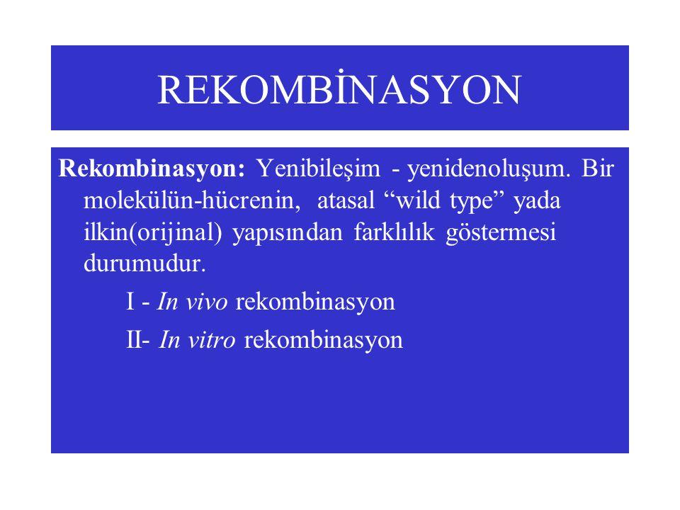 """REKOMBİNASYON Rekombinasyon: Yenibileşim - yenidenoluşum. Bir molekülün-hücrenin, atasal """"wild type"""" yada ilkin(orijinal) yapısından farklılık gösterm"""