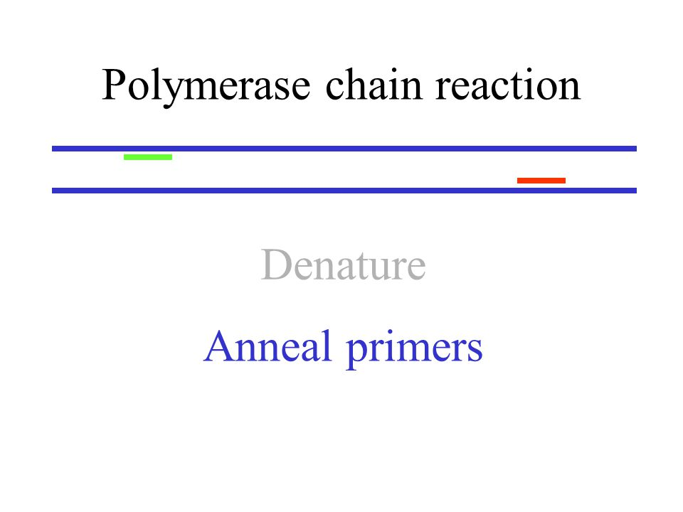 Polymerase chain reaction Anneal primers Denature