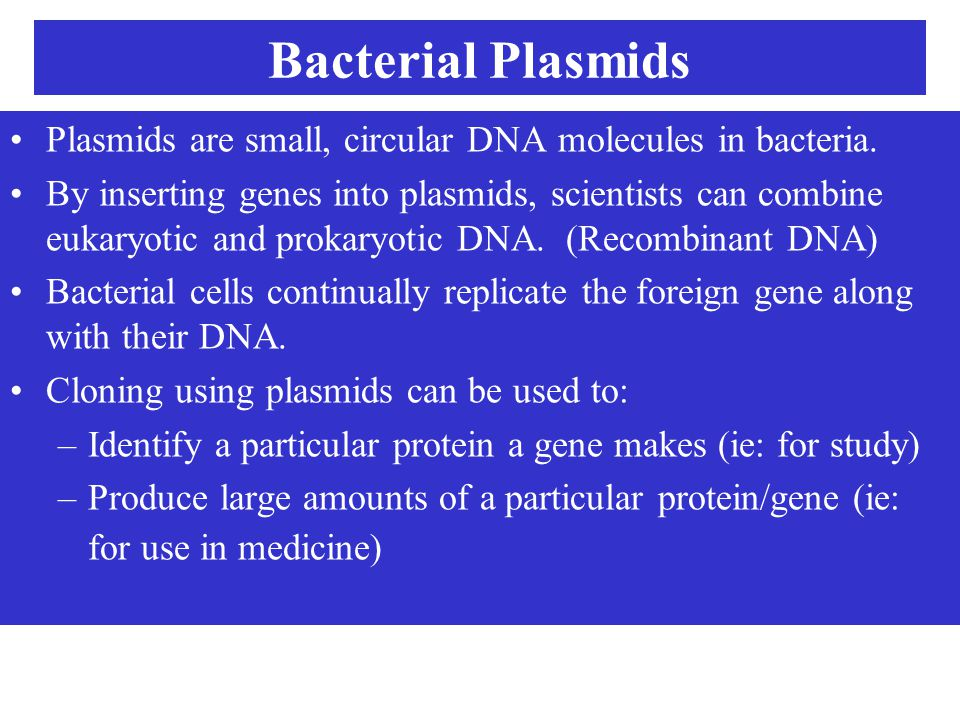 Bacterial Plasmids Plasmids are small, circular DNA molecules in bacteria. By inserting genes into plasmids, scientists can combine eukaryotic and pro