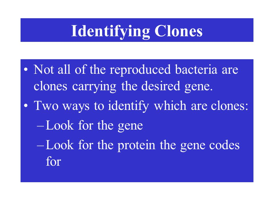 Identifying Clones Not all of the reproduced bacteria are clones carrying the desired gene. Two ways to identify which are clones: –Look for the gene