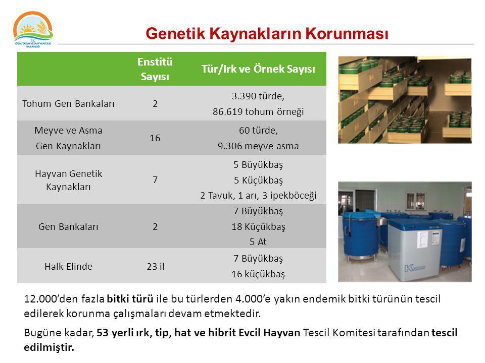 Genetik Kaynakların Korunması Enstitü Sayısı Tür/Irk ve Örnek Sayısı Tohum Gen Bankaları2 3.390 türde, 86.619 tohum örneği Meyve ve Asma Gen Kaynaklar