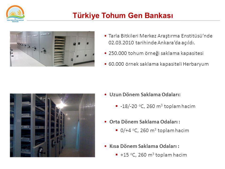 Türkiye Tohum Gen Bankası Tarla Bitkileri Merkez Araştırma Enstitüsü'nde 02.03.2010 tarihinde Ankara'da açıldı. 250.000 tohum örneği saklama kapasites