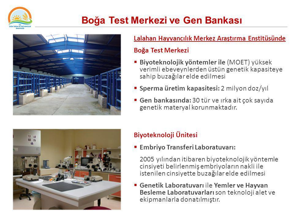 Boğa Test Merkezi ve Gen Bankası Lalahan Hayvancılık Merkez Araştırma Enstitüsünde Boğa Test Merkezi  Biyoteknolojik yöntemler ile (MOET) yüksek veri