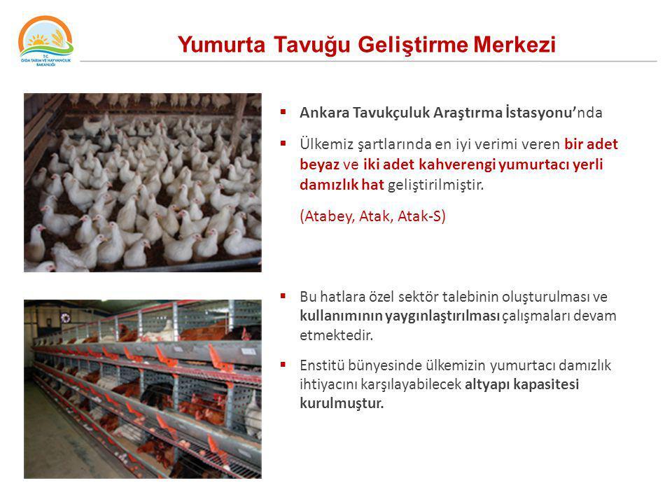 Yumurta Tavuğu Geliştirme Merkezi  Ankara Tavukçuluk Araştırma İstasyonu'nda  Ülkemiz şartlarında en iyi verimi veren bir adet beyaz ve iki adet kah