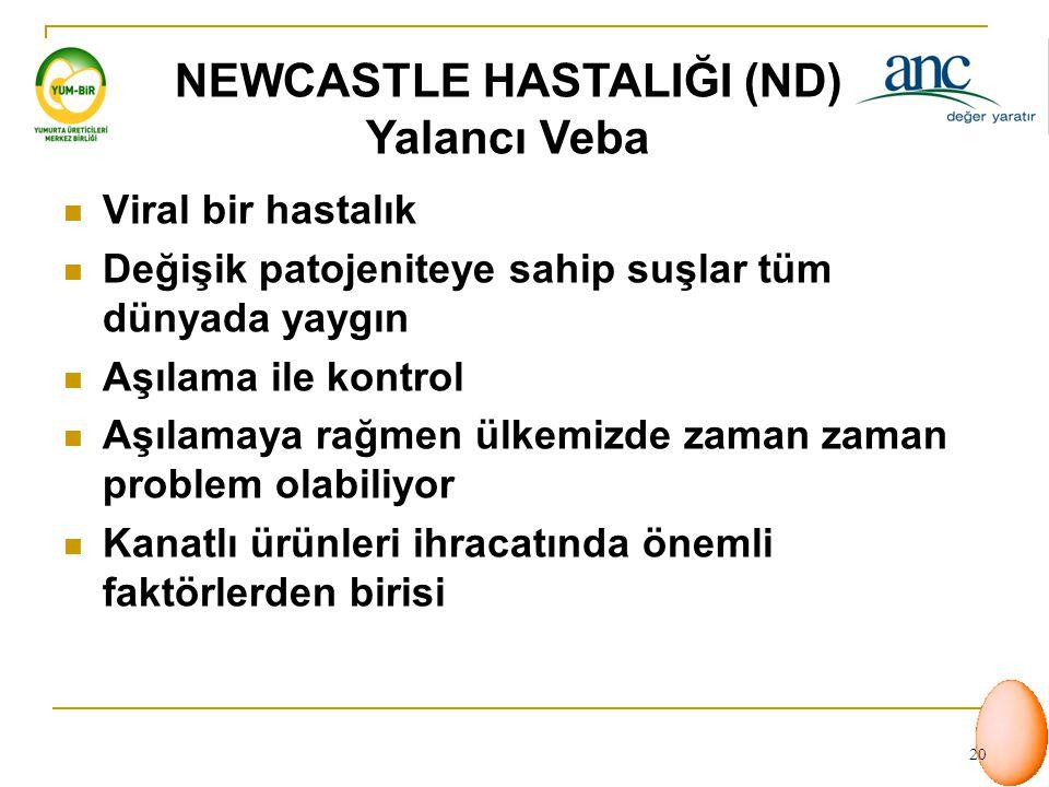 19 KANATLI HASTALIKLARI  Newcastle Hastalığı - ND (Yalancı Veba)  Gumboro Hastalığı (IBD)  Enfeksiyöz Coryza  Enfeksiyöz Bronşitis (IB)  Avian In