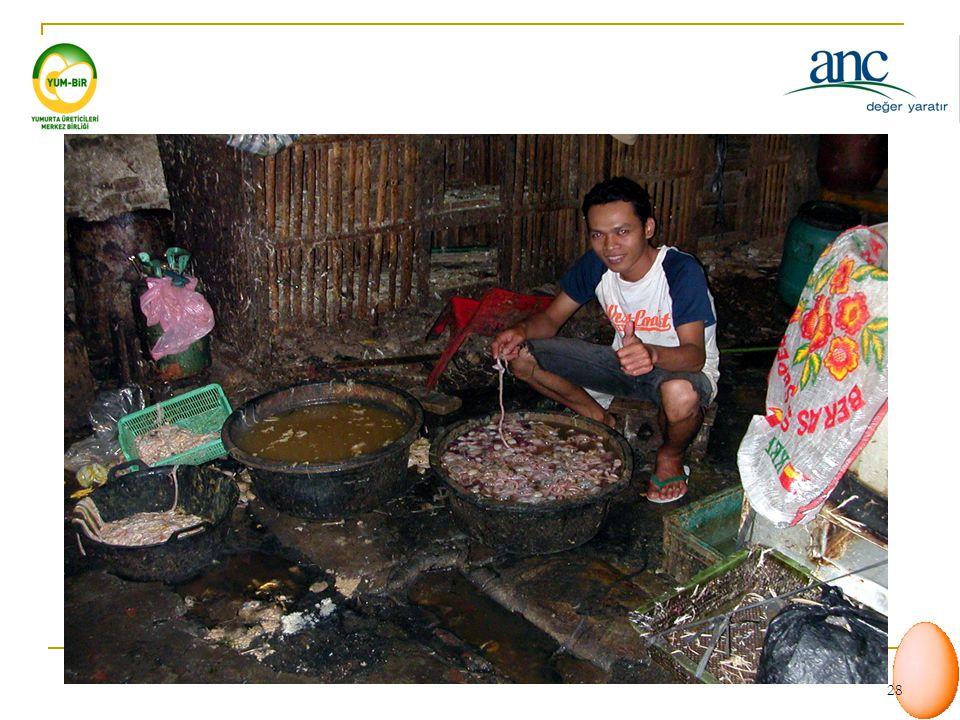 27 Güney Doğu Asya Su kuşları ve canlı hayvan pazarlarından ötürü yüksek risk oluşumu