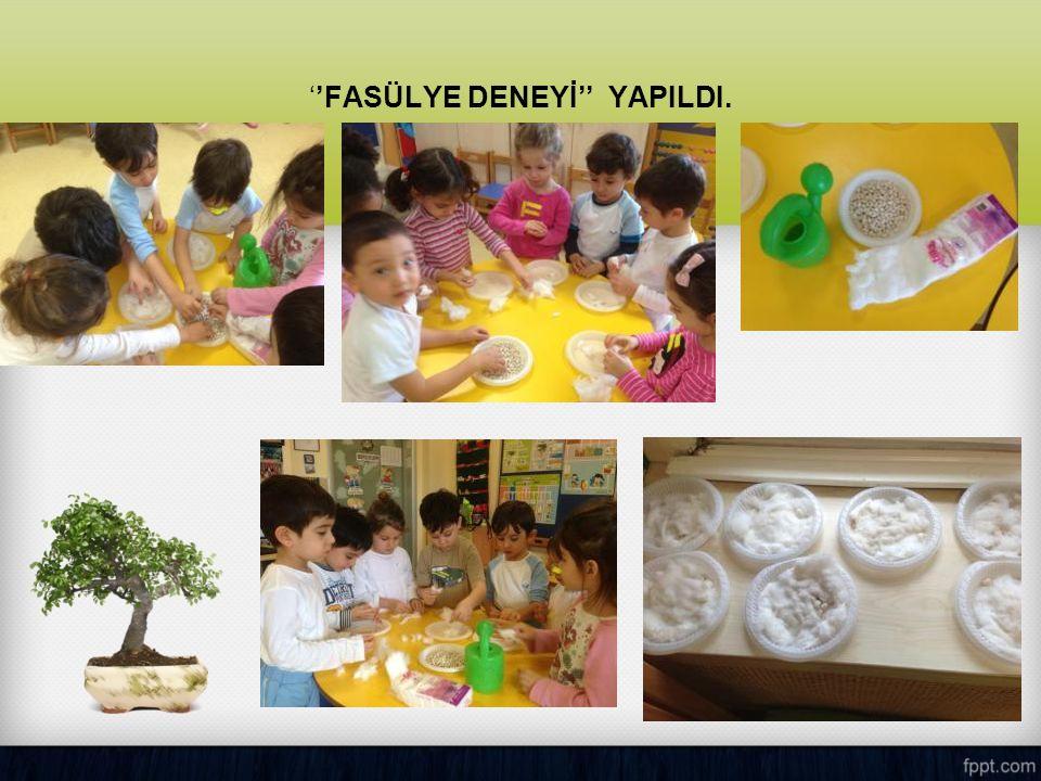 ''FASÜLYE DENEYİ'' YAPILDI.