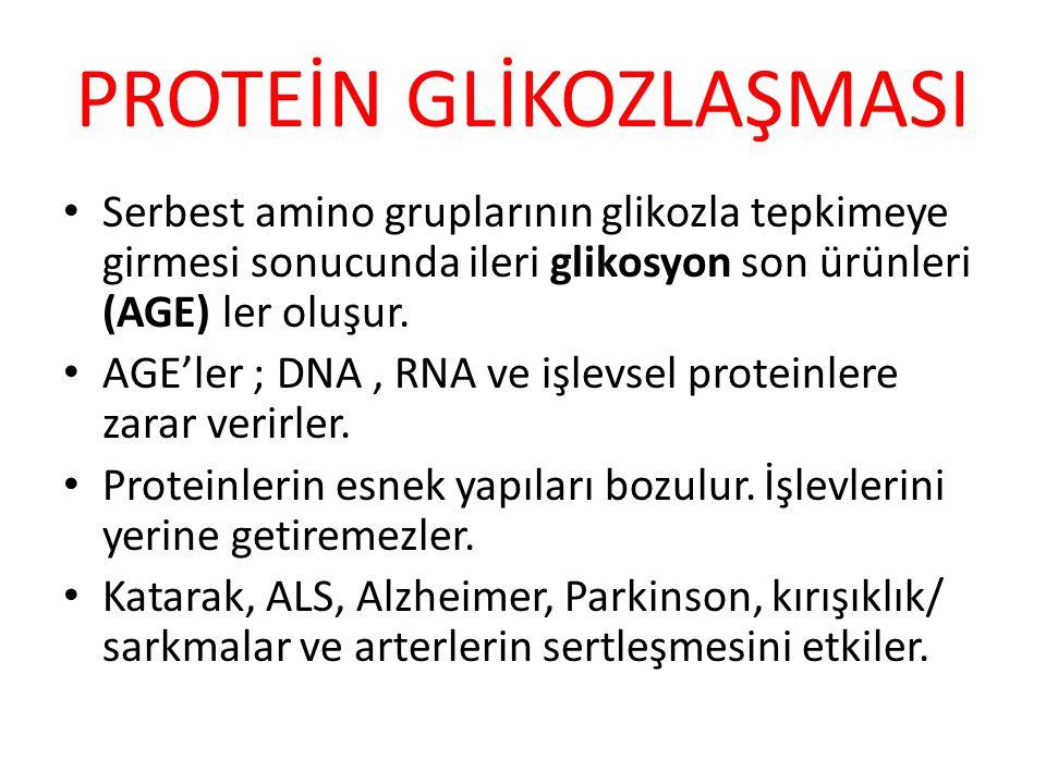 PROTEİN GLİKOZLAŞMASI Serbest amino gruplarının glikozla tepkimeye girmesi sonucunda ileri glikosyon son ürünleri (AGE) ler oluşur. AGE'ler ; DNA, RNA
