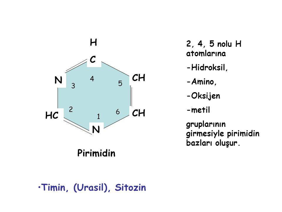 HCHC CH N HC N 1 2 3 4 5 6 Pirimidin 2, 4, 5 nolu H atomlarına -Hidroksil, -Amino, -Oksijen -metil gruplarının girmesiyle pirimidin bazları oluşur. Ti