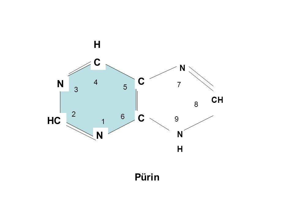 HCHC C C N HC N 1 2 3 4 5 6 Pürin N NHNH CH 7 8 9