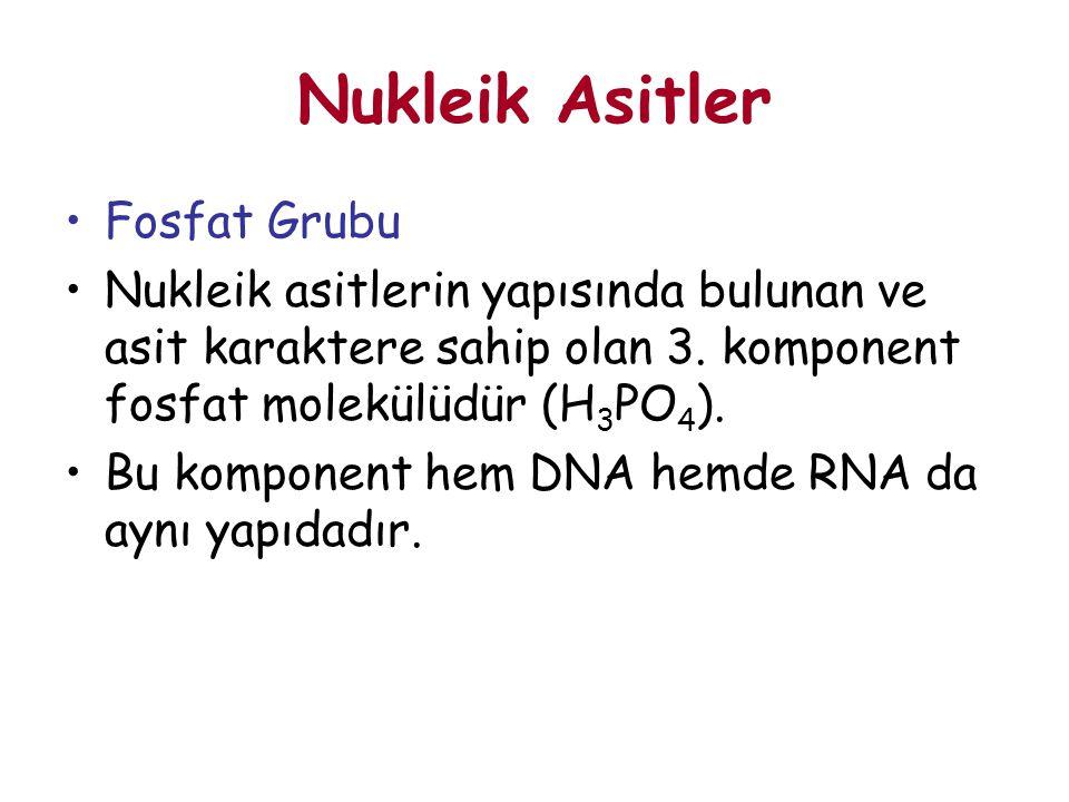 Fosfat Grubu Nukleik asitlerin yapısında bulunan ve asit karaktere sahip olan 3. komponent fosfat molekülüdür (H 3 PO 4 ). Bu komponent hem DNA hemde