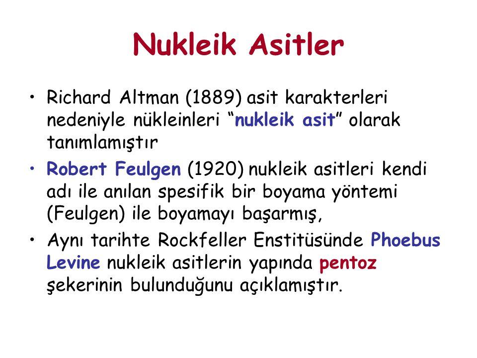 """Richard Altman (1889) asit karakterleri nedeniyle nükleinleri """"nukleik asit"""" olarak tanımlamıştır Robert Feulgen (1920) nukleik asitleri kendi adı ile"""