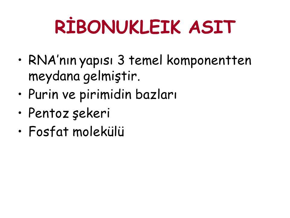 RİBONUKLEIK ASIT RNA'nın yapısı 3 temel komponentten meydana gelmiştir. Purin ve pirimidin bazları Pentoz şekeri Fosfat molekülü