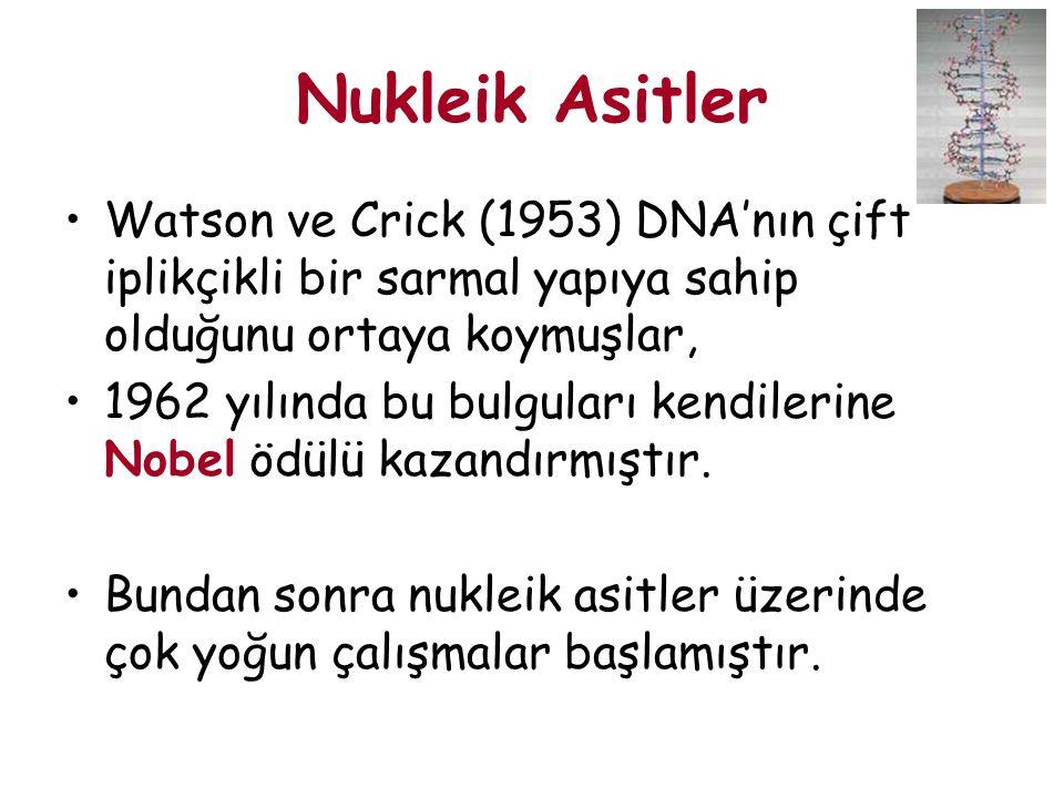 Watson ve Crick (1953) DNA'nın çift iplikçikli bir sarmal yapıya sahip olduğunu ortaya koymuşlar, 1962 yılında bu bulguları kendilerine Nobel ödülü ka
