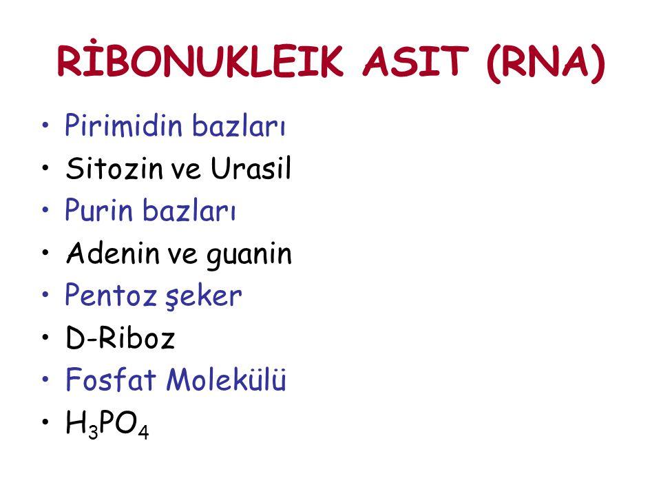 RİBONUKLEIK ASIT (RNA) Pirimidin bazları Sitozin ve Urasil Purin bazları Adenin ve guanin Pentoz şeker D-Riboz Fosfat Molekülü H 3 PO 4