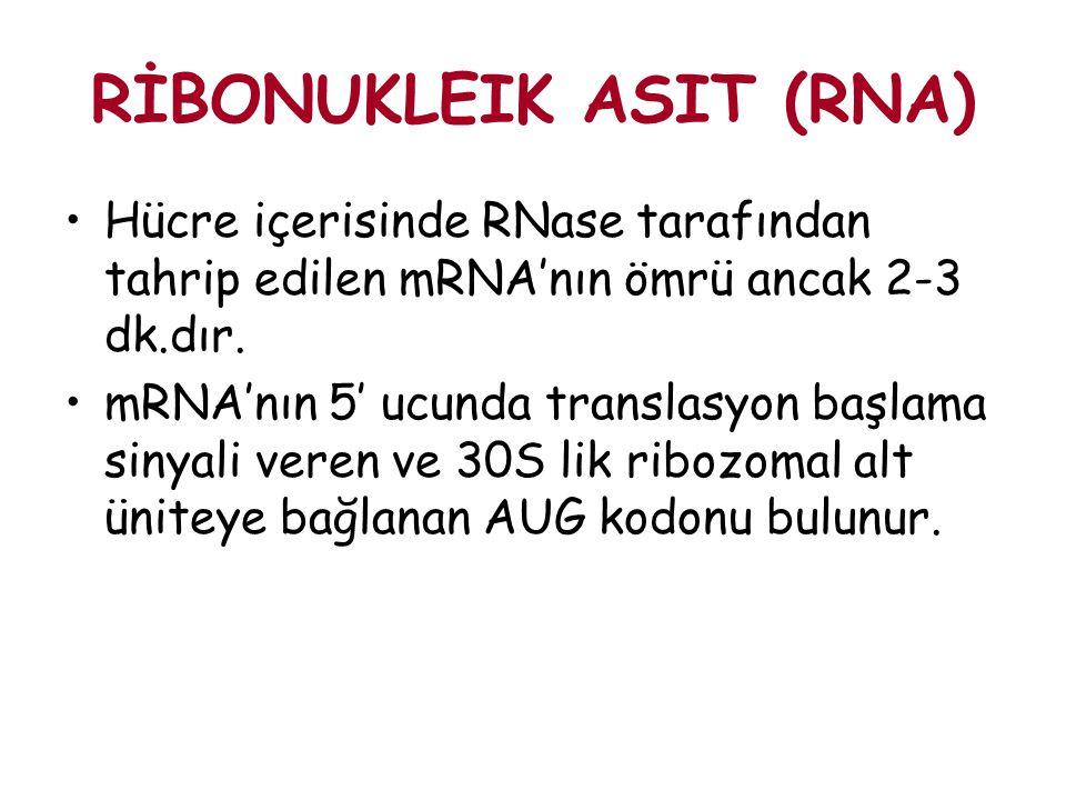 RİBONUKLEIK ASIT (RNA) Hücre içerisinde RNase tarafından tahrip edilen mRNA'nın ömrü ancak 2-3 dk.dır. mRNA'nın 5' ucunda translasyon başlama sinyali