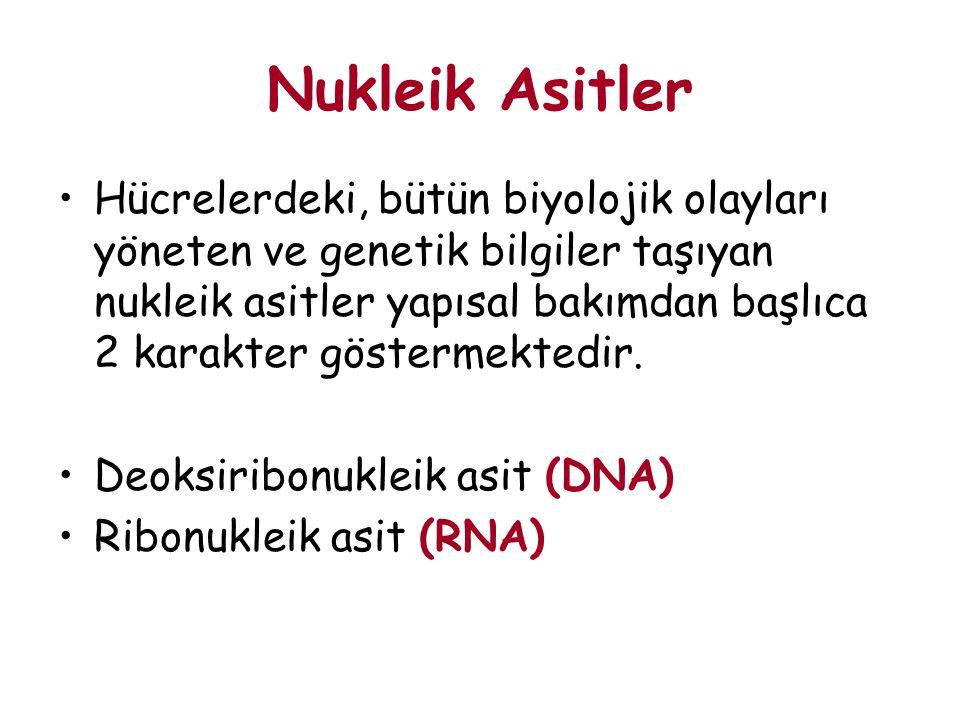 Hücrelerdeki, bütün biyolojik olayları yöneten ve genetik bilgiler taşıyan nukleik asitler yapısal bakımdan başlıca 2 karakter göstermektedir. Deoksir
