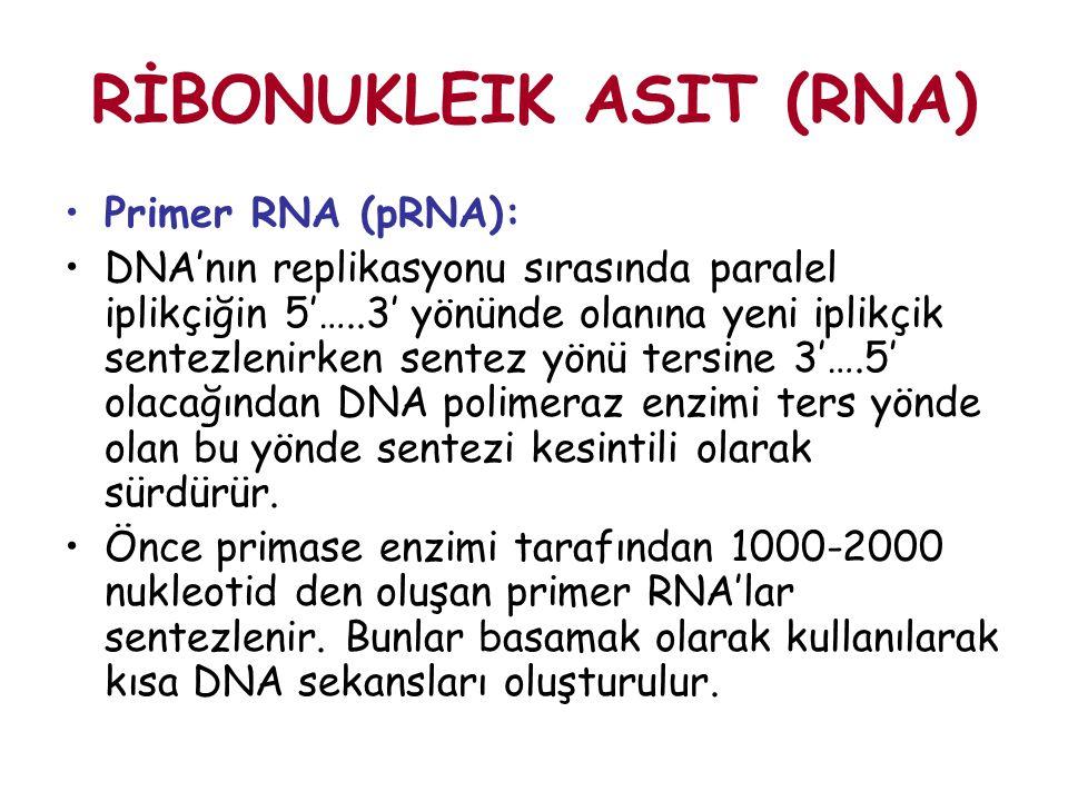 RİBONUKLEIK ASIT (RNA) Primer RNA (pRNA): DNA'nın replikasyonu sırasında paralel iplikçiğin 5'…..3' yönünde olanına yeni iplikçik sentezlenirken sente