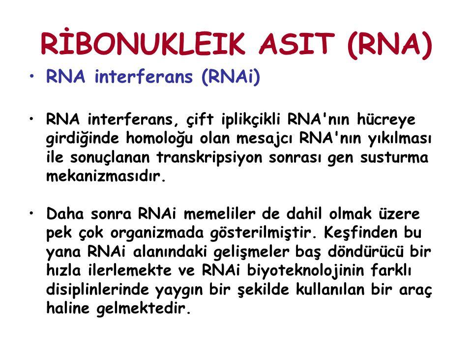 RİBONUKLEIK ASIT (RNA) RNA interferans (RNAi) RNA interferans, çift iplikçikli RNA'nın hücreye girdiğinde homoloğu olan mesajcı RNA'nın yıkılması ile