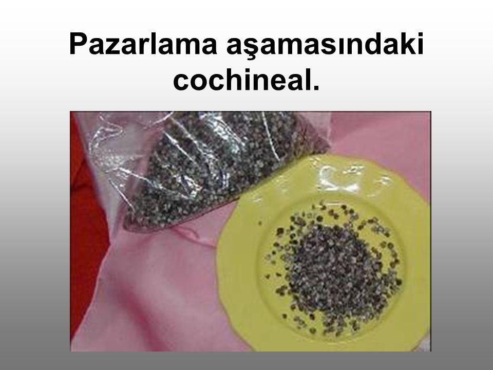 Pazarlama aşamasındaki cochineal.