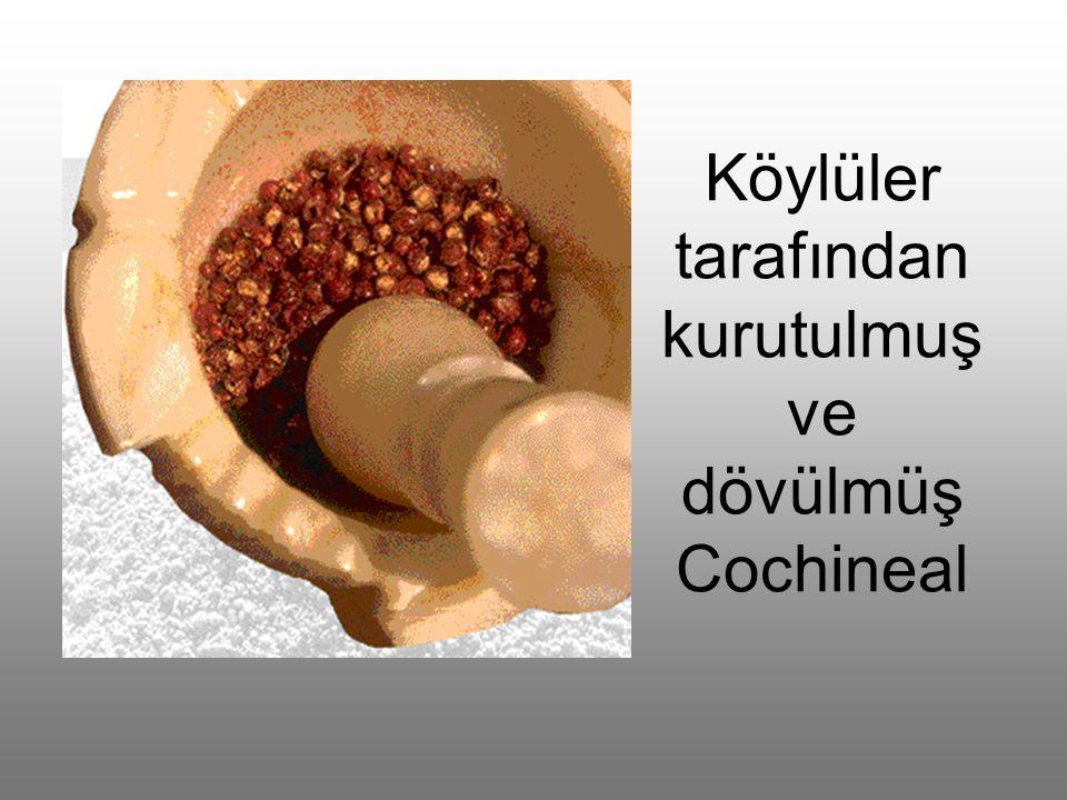 Köylüler tarafından kurutulmuş ve dövülmüş Cochineal