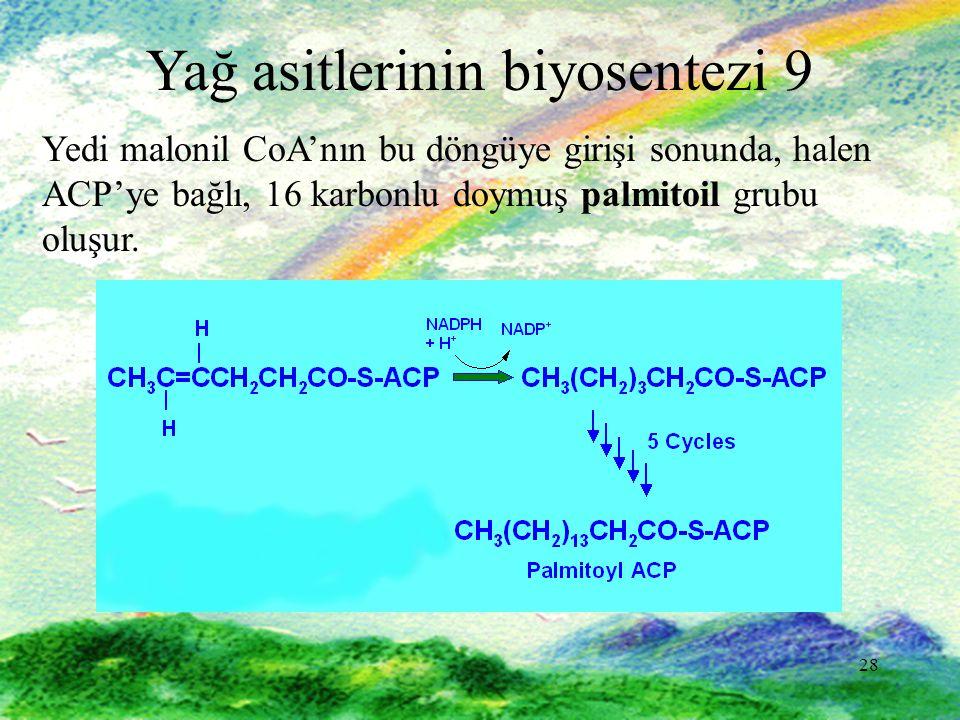 28 Yağ asitlerinin biyosentezi 9 Yedi malonil CoA'nın bu döngüye girişi sonunda, halen ACP'ye bağlı, 16 karbonlu doymuş palmitoil grubu oluşur.