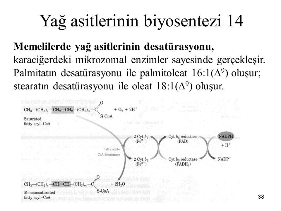 38 Yağ asitlerinin biyosentezi 14 Memelilerde yağ asitlerinin desatürasyonu, karaciğerdeki mikrozomal enzimler sayesinde gerçekleşir. Palmitatın desat