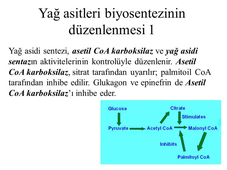 41 Yağ asitleri biyosentezinin düzenlenmesi 1 Yağ asidi sentezi, asetil CoA karboksilaz ve yağ asidi sentazın aktivitelerinin kontrolüyle düzenlenir.