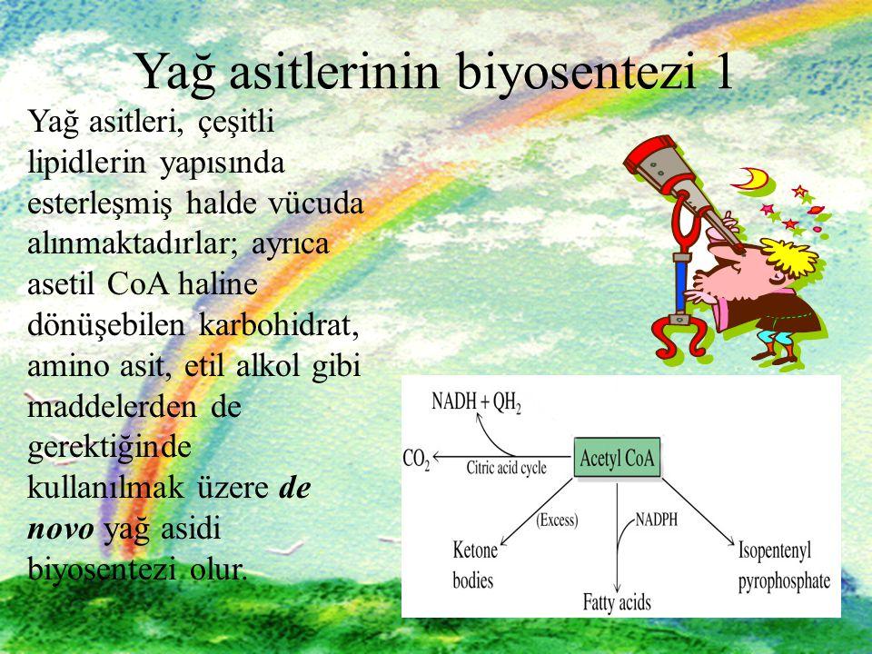 5 5 Yağ asitlerinin biyosentezi 1 Yağ asitleri, çeşitli lipidlerin yapısında esterleşmiş halde vücuda alınmaktadırlar; ayrıca asetil CoA haline dönüşe