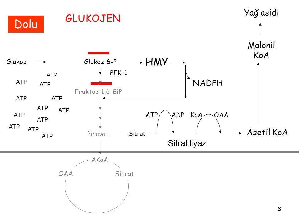 8 GlukozGlukoz 6-P Fruktoz 1,6-BiP PFK-1 Pirüvat AKoA OAASitrat ATP Sitrat GLUKOJEN Dolu HMY NADPH ATP Asetil KoA ATPADPKoA Sitrat liyaz OAA Malonil K