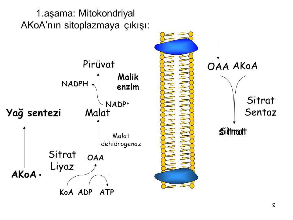 9 sitrat 1.aşama: Mitokondriyal AKoA'nın sitoplazmaya çıkışı: OAA AKoA Sitrat Sentaz Sitrat ATPADPKoA OAA AKoA Sitrat Liyaz Malat dehidrogenaz Malat M