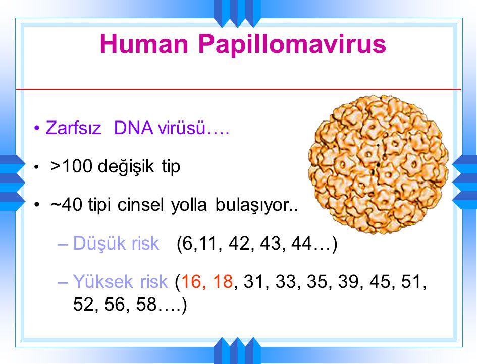 Human Papillomavirus Zarfsız DNA virüsü…. >100 değişik tip ~40 tipi cinsel yolla bulaşıyor.. –Düşük risk (6,11, 42, 43, 44…) –Yüksek risk (16, 18, 31,