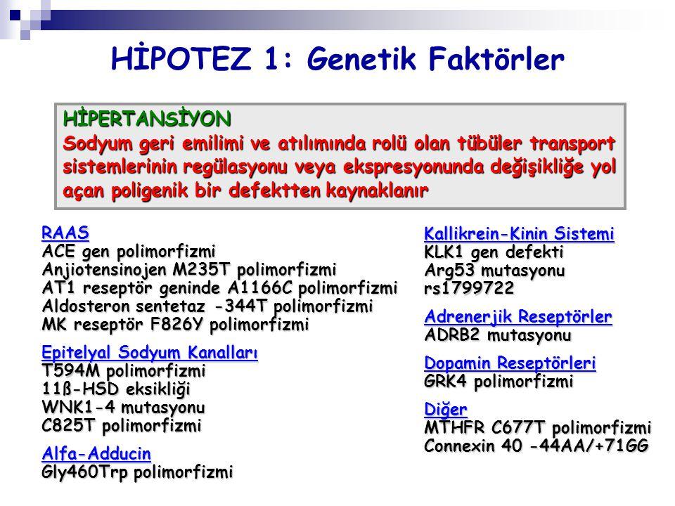 HİPOTEZ 1: Genetik Faktörler HİPERTANSİYON Sodyum geri emilimi ve atılımında rolü olan tübüler transport sistemlerinin regülasyonu veya ekspresyonunda