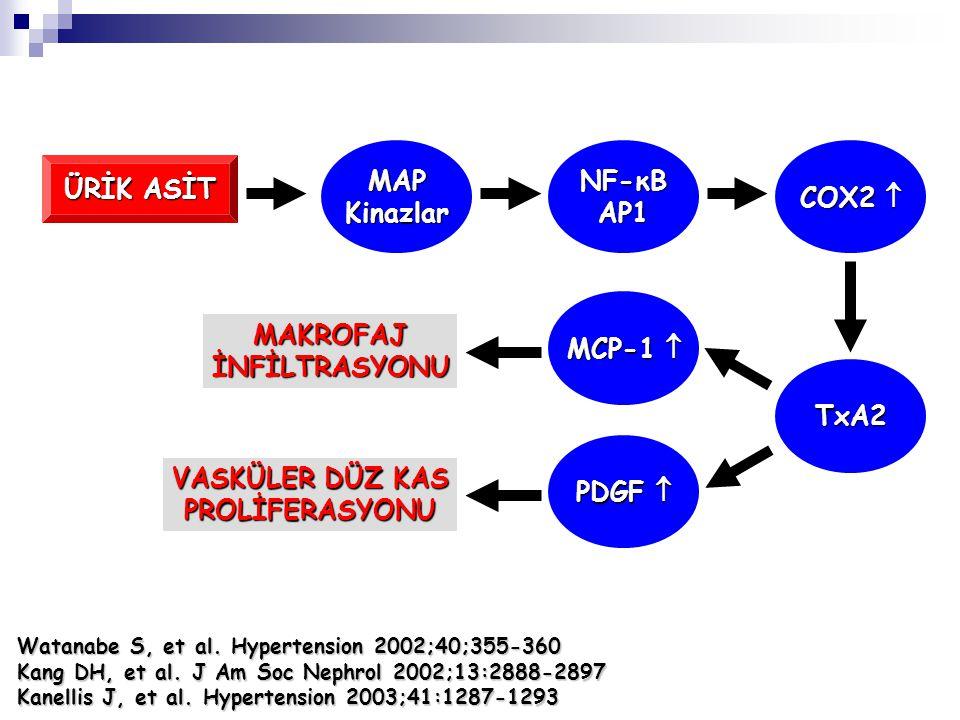 ÜRİK ASİT MAPKinazlar NF-κB AP1 COX2  TxA2 PDGF  MCP-1  VASKÜLER DÜZ KAS PROLİFERASYONU MAKROFAJİNFİLTRASYONU Watanabe S, et al. Hypertension 2002;