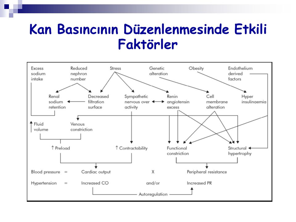 Hiperüriseminin Renal Arteriolopati Üzerine Etkisi: Kan Basıncından Bağımsız Bir Mekanizma Mazzali M, et al.
