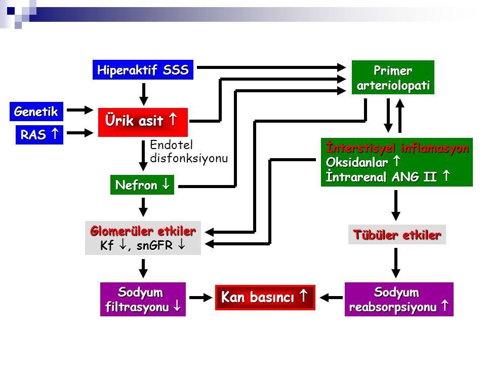 Hiperaktif SSS Genetik RAS  Ürik asit  Nefron  Endotel disfonksiyonu Glomerüler etkiler Kf , snGFR  Sodyum filtrasyonu  Primerarteriolopati İnte