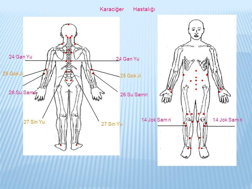 Karaciğer Hastalığı 24 Gan Yu 25 Gok Ji 26 Su Samri 27 Sin Yu 26 Su Samri 25 Gok Ji 24 Gan Yu 14 Jok Sam ri